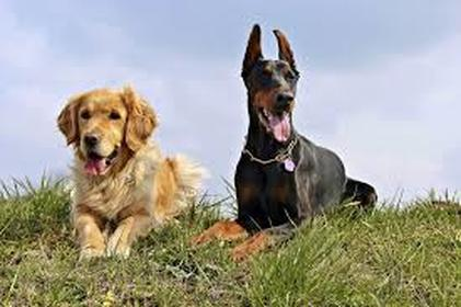 Witney Dog Insurance For 2 Dogs