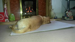 Dog By The Fire Hearth