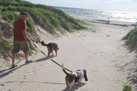 Coastal Pet Walking Insurance