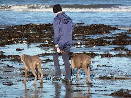 Beach Dog Walking Insurance Cost